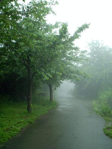 霧の並木道